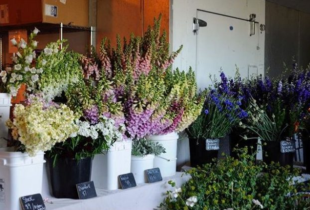 Fresh, local, and seasonal flowers at Piedmont Wholesale Flowers © Ali Donnelly
